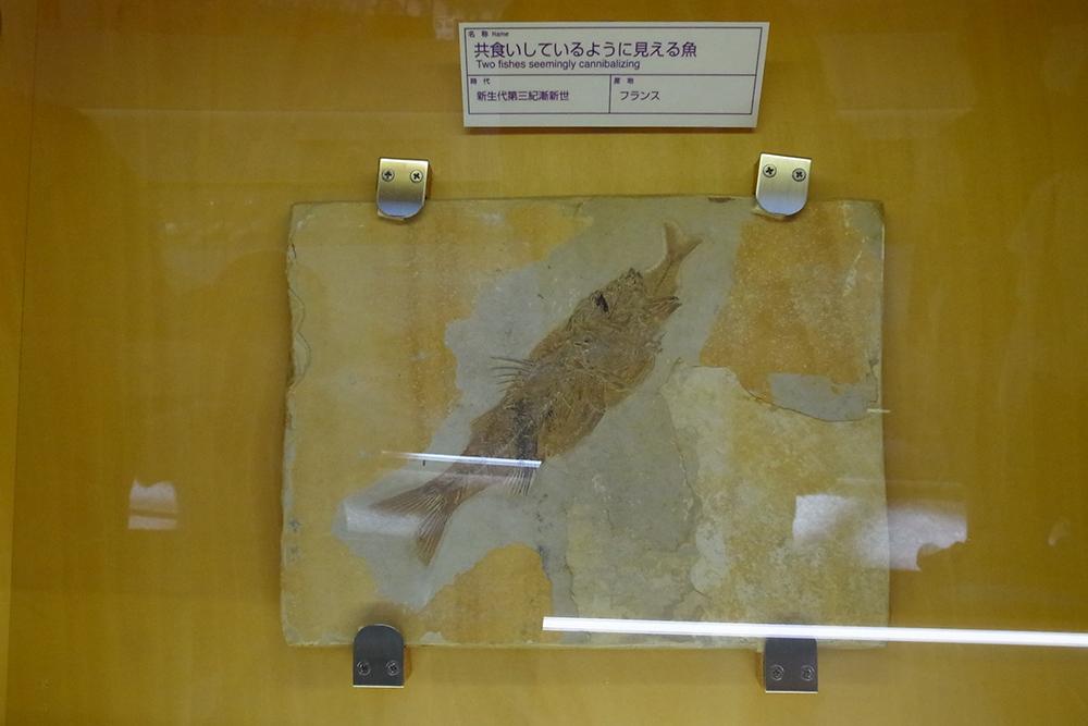 福井県立恐竜博物館 の常設展示室